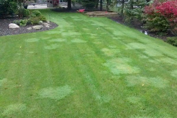 How to deal with common gardening issues