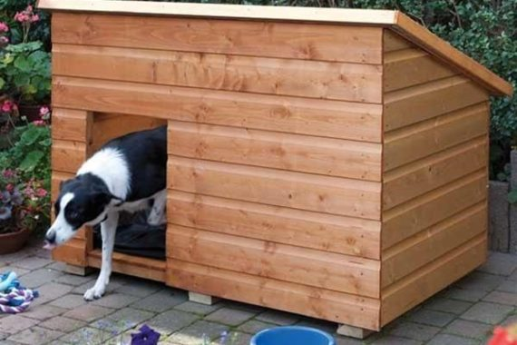 Methods to keep your pet away from the garden